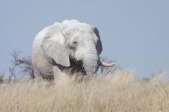 Elefante Namibia 1_ridotte
