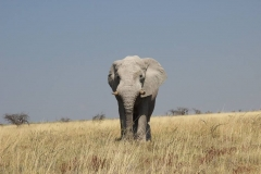 Elefante Namibia 2_ridotte