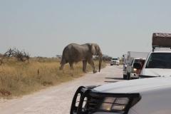 Elefante Namibia 3_ridotte